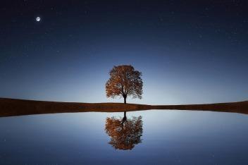 三十张图助你看清红黑树的前世今生