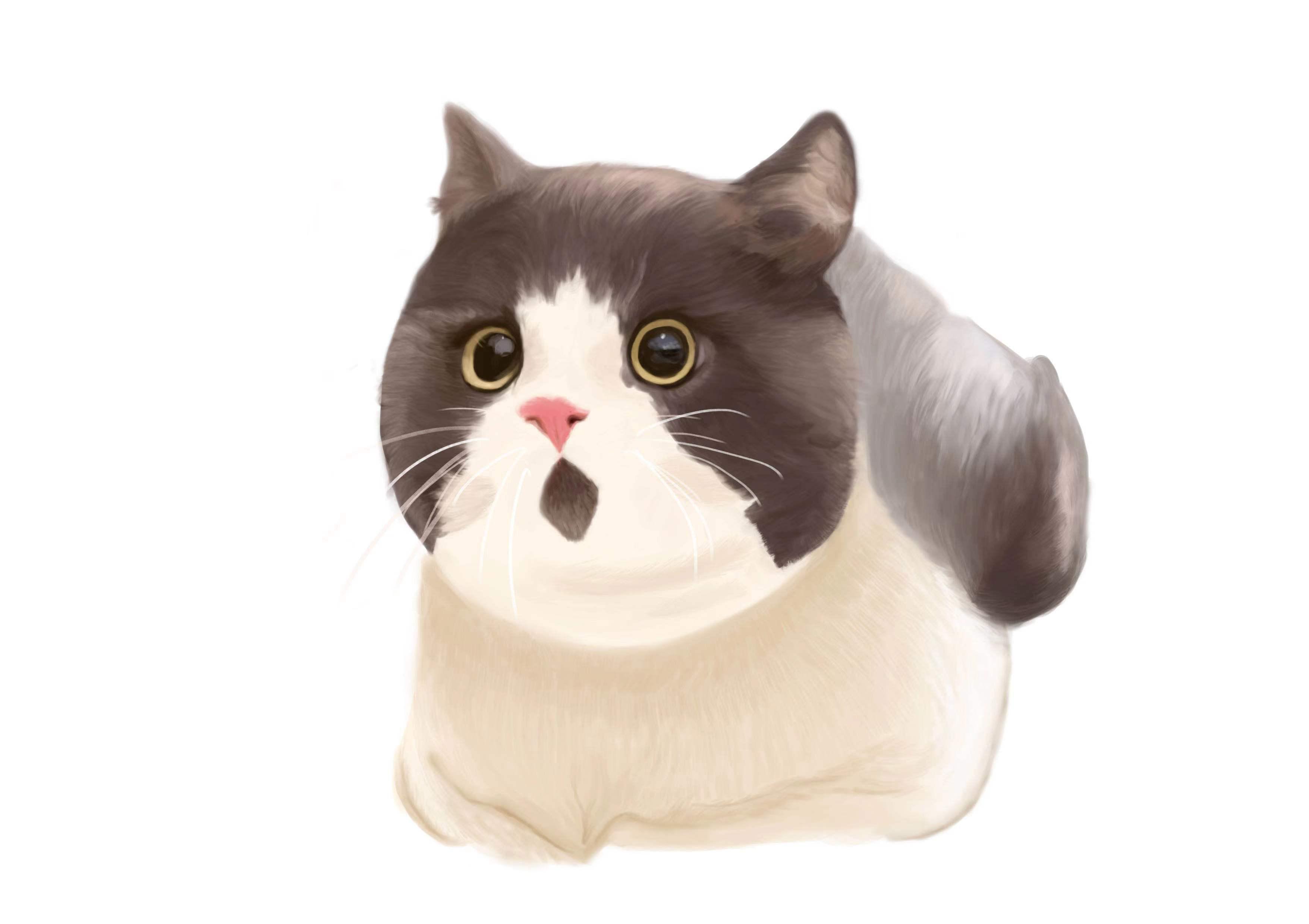 如何从Telegram下载一整套可爱的猫猫表情包?