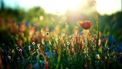 当你的内心归于平静,美好便会悄然而至